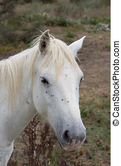 Close Up of a White Horse's Face on the Left