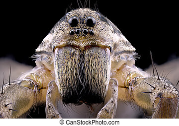 Close Up Of A Wolf Spider