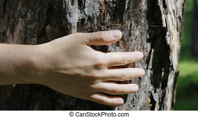 Close-up of a woman's hand, which is carefully stroking the tree
