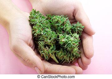 Close up of ak-47 strain medical marijuana buds in hand, ...