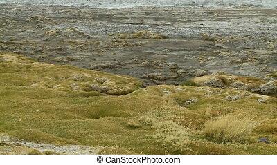 Close-Up Of Algae In Laguna Colorada, Bolivia - Medium...