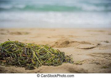 Close up of algae on the beach sand
