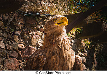 close-up of an eagle