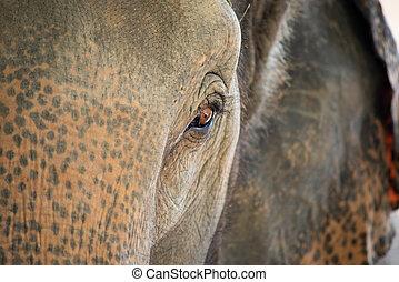 Close up of an elephant eye