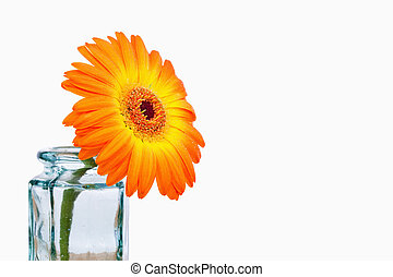 Close up of an orange sunflower in a glass flask