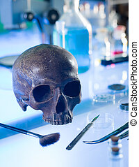 close-up of ancient human skull set up on a table in a forensics laboratory