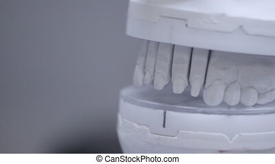 Close up of artificial jaw at the dental clinic. Dentist...