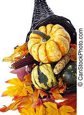 assortment of fall