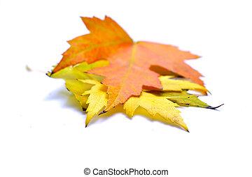 Close-up of autumn leaf on white