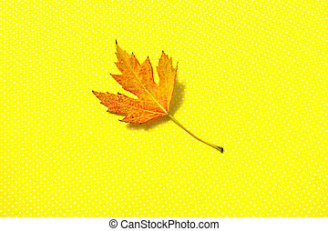 Close-up of autumn leaf on yellow