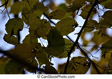 Close up of autumn leaves against the sky