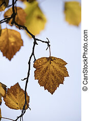 Close up of autumn leaves.