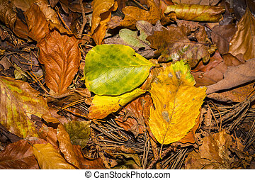 close up of autumn leaves on the forest soil