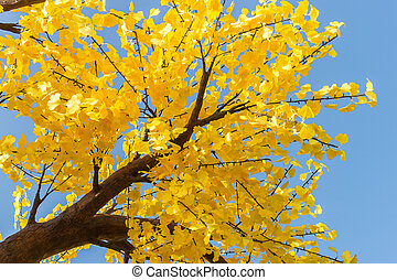 Close up of autumn tree with yellow leaves at the blue sky background