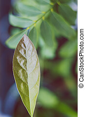 close-up of avocado leaf shot at extremely shallow depth of field