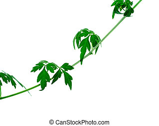 Close up of Balloon vine plant on white background.