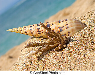 Close up of beach