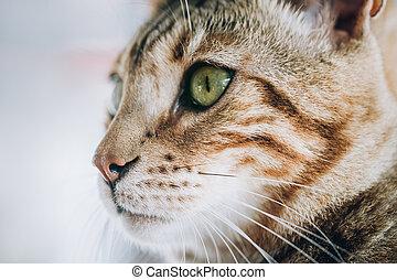 Close up of beautiful cat eyes