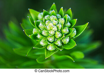 Close-up of beautiful green flower on a garden background