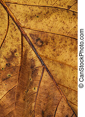 Close up of beautiful nature green leaf texture background