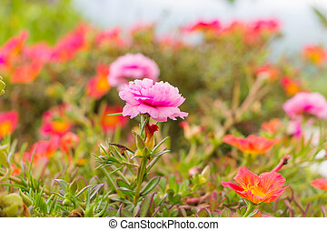Close up of beautiful pink flowers