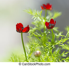 beautiful small red flower in garden