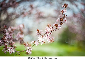 Close up of beautiful spring flowers at blurred background