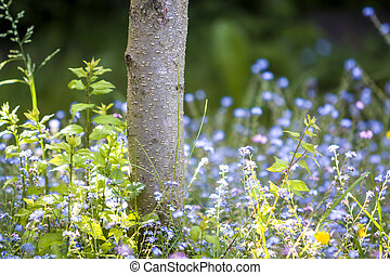 Close-up of beautiful tender wild blue and yellow small flowers lit by summer sun lavishly blooming under tree trunk on blurred dark green bokeh background. Beauty and harmony of nature concept.