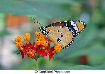Close-up of beautifull butterfly on a flower.