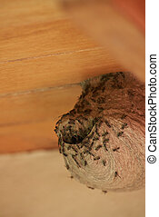 Close up of bee nest