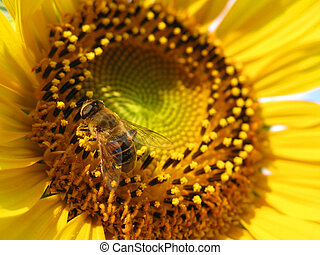 close up of bee on sunflower