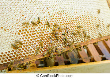 close up of bees in the hive