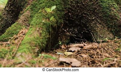 Close up of big pine tree trunk