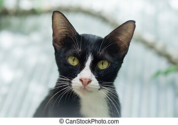 Black cat with white feet and a nose are looking