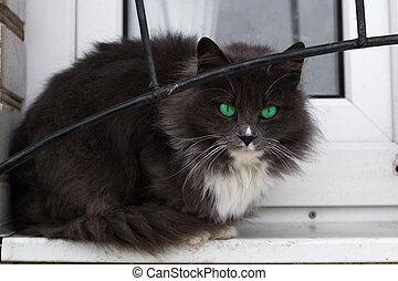 Close up of black furry cat with bright green eyes sitting on window