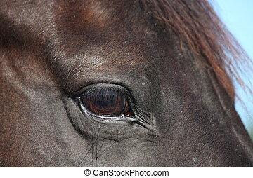 Close up of black horse eye