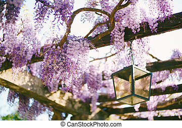 Close-up of blooming wisteria on wooden beams by a hanging street lamp.