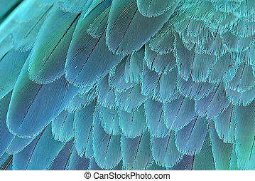 close up of blue and yellow macaw wing