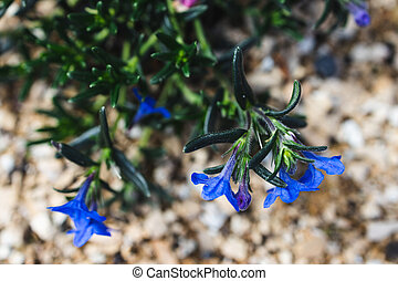 close-up of blue flowers outdoor