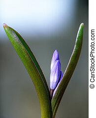 Close-up of blue spring flower