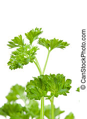 Close up of blurred chervil sprigs against a white...