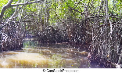 Close up of boat floating through mangrove swamps with...
