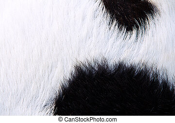 close up of boer goat wool background