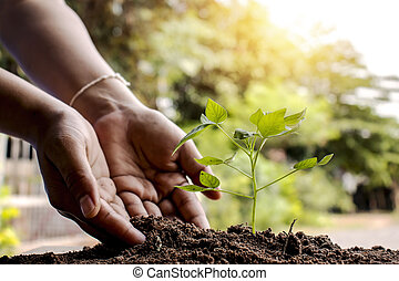 Close-up of both hands of farmers, pay attention to small plants by putting the soil in seedlings that are planted on the ground.