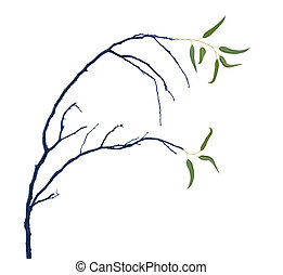 close up of branch isolated on white