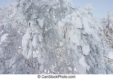 close-up of branch of a tree covered by a snow
