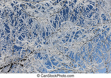 branches of tree covered with snow