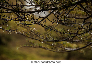 Close-up of branches of trees in forest