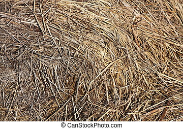 Close up of brown hay