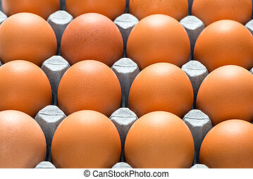 Close Up of Brown Hen Eggs in Tray for Backgrounds